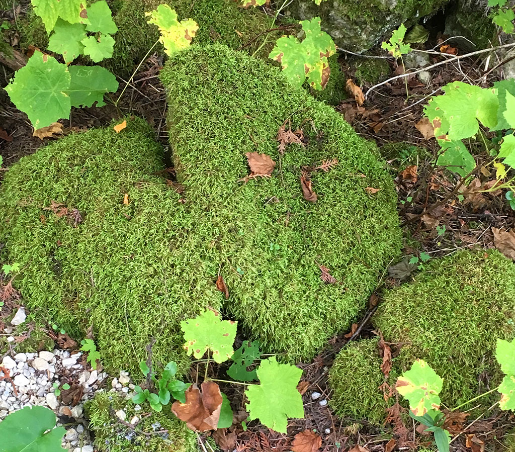 Moss Covered Rocks at Shivering Sands Preserve Near Door County Hotel and Resort