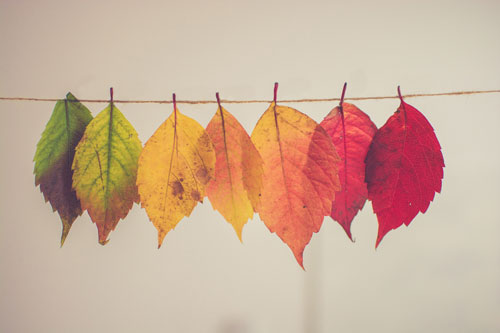 Radiant fall Leaves of green, yellow, orange, red and deep red